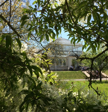 The Chinese fringe tree framing a view of the Temperate House
