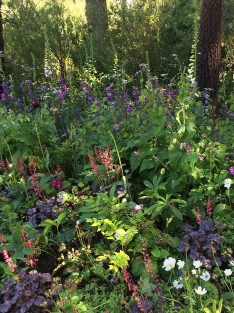 Shade garden planting in St James's Park